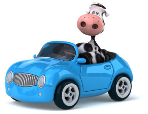 Cars to Cows and Everything in Between