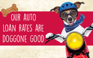 Our auto rates are doggone good